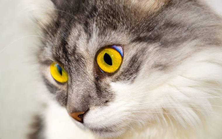 cat-76116_960_720