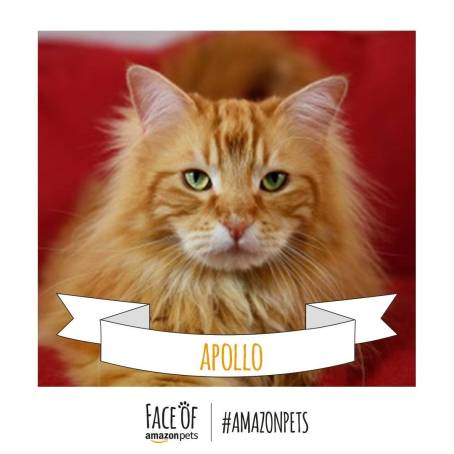 Apollo_Cat._V272567600_