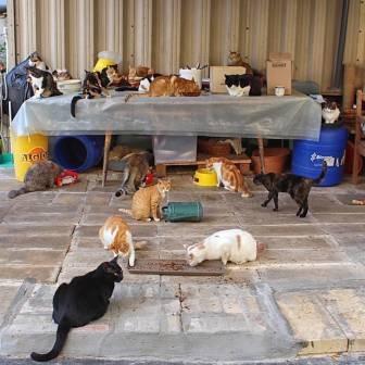 Malta - CSAF 1 - ©2016 Islands of Cats 2