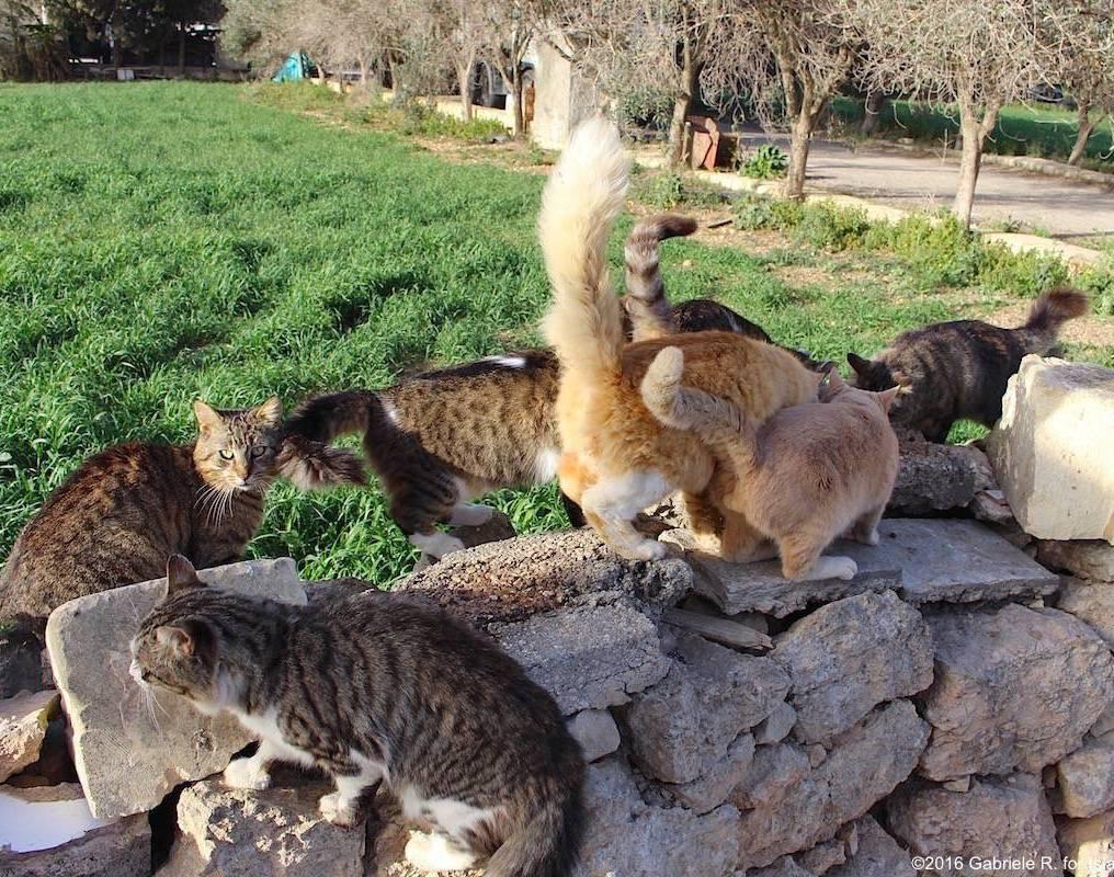 Malta - Xemxija 2 - ©2016 Islands of Cats 2