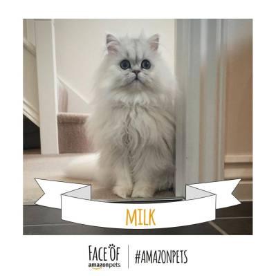 Milk_Cat._V272264079_