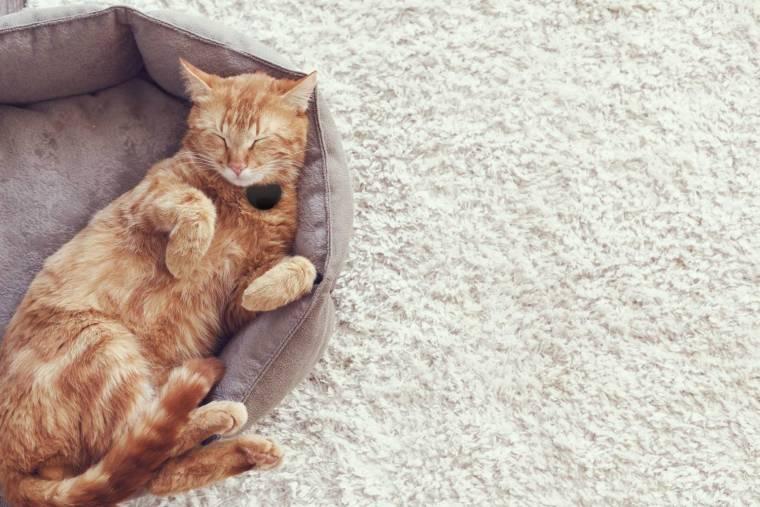 NEW Lifestyle Ginger Cat Black