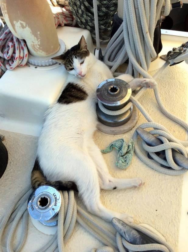 onboard Fandancer - dozing on deck