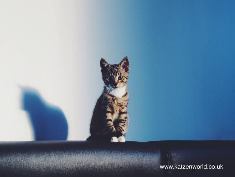 Pretty Kitty 2