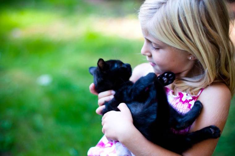 black cats post 1