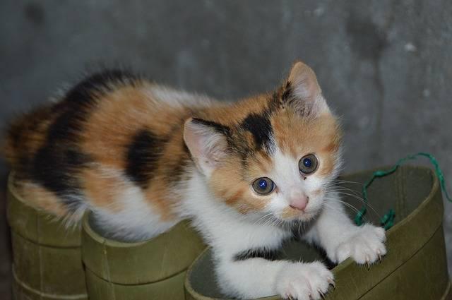 cat-2