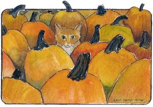 Cat in a pumpkin patch.