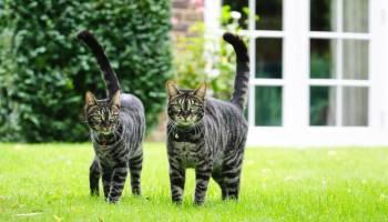 Cat Whispering – top tips to understand feline behaviour