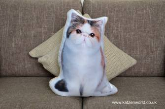 asc-1023-exotic-short-hair-cat-sofa