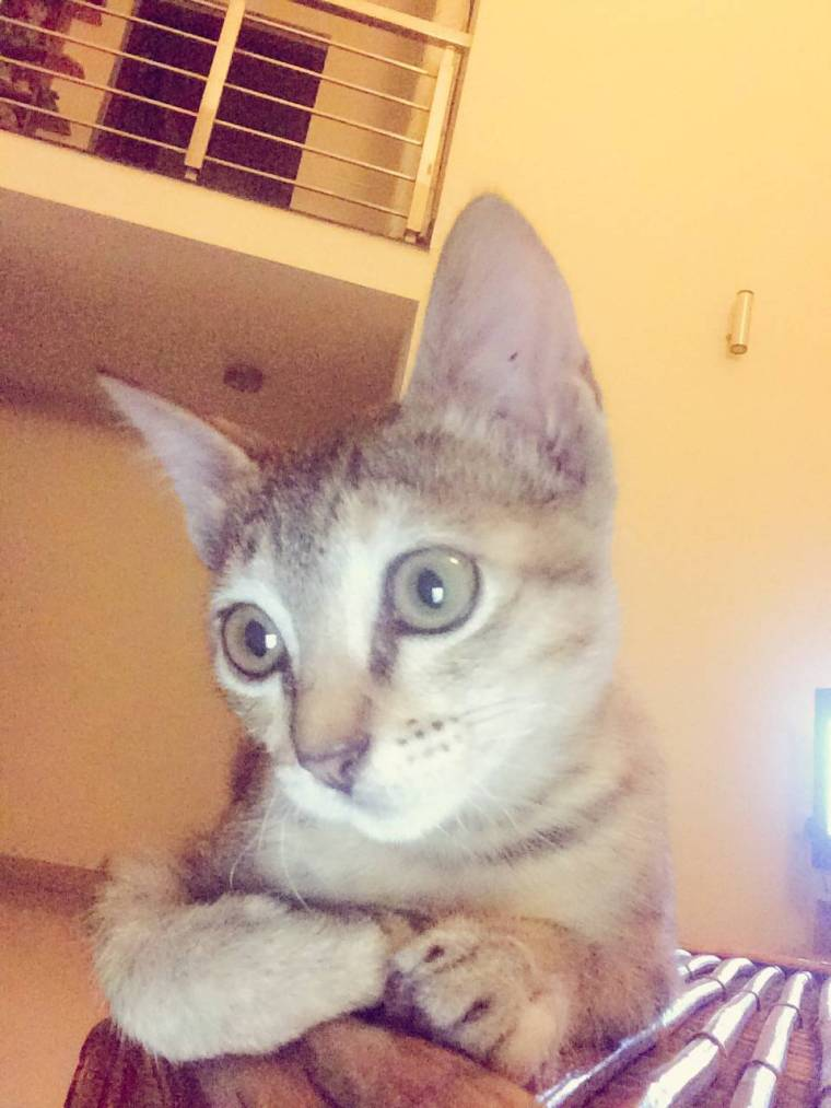 Misha takes a lot of catfies! One of Misha's catfie!!