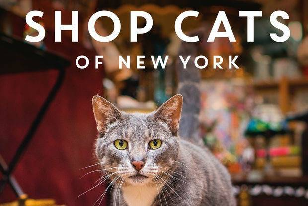 shop-cats-of-new-york-2