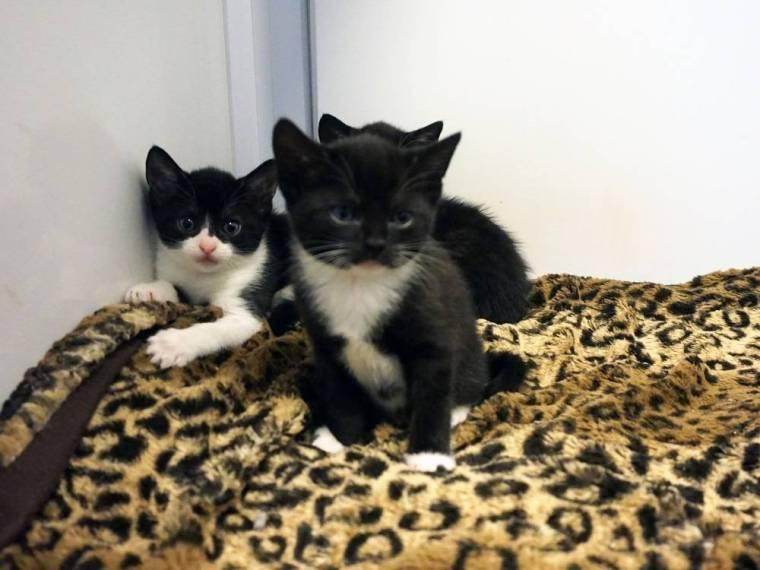 some-of-sweeties-kittens