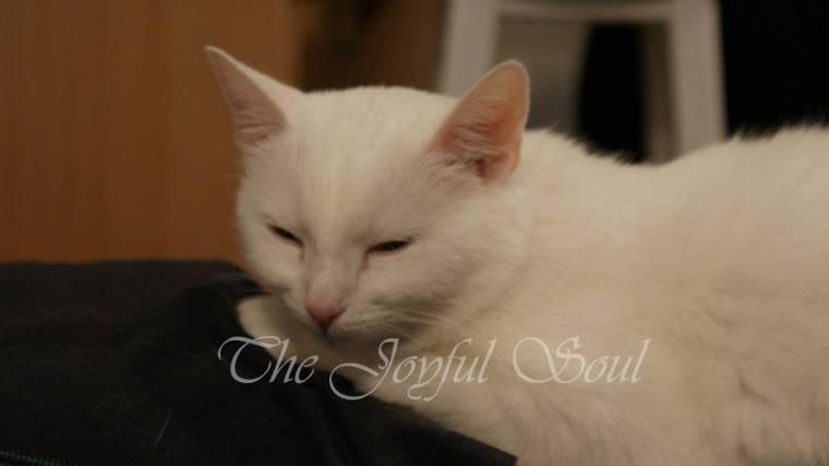 Lola the Cuddle-Puss 2