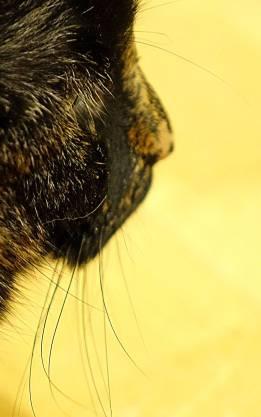 sasha_whiskers_3