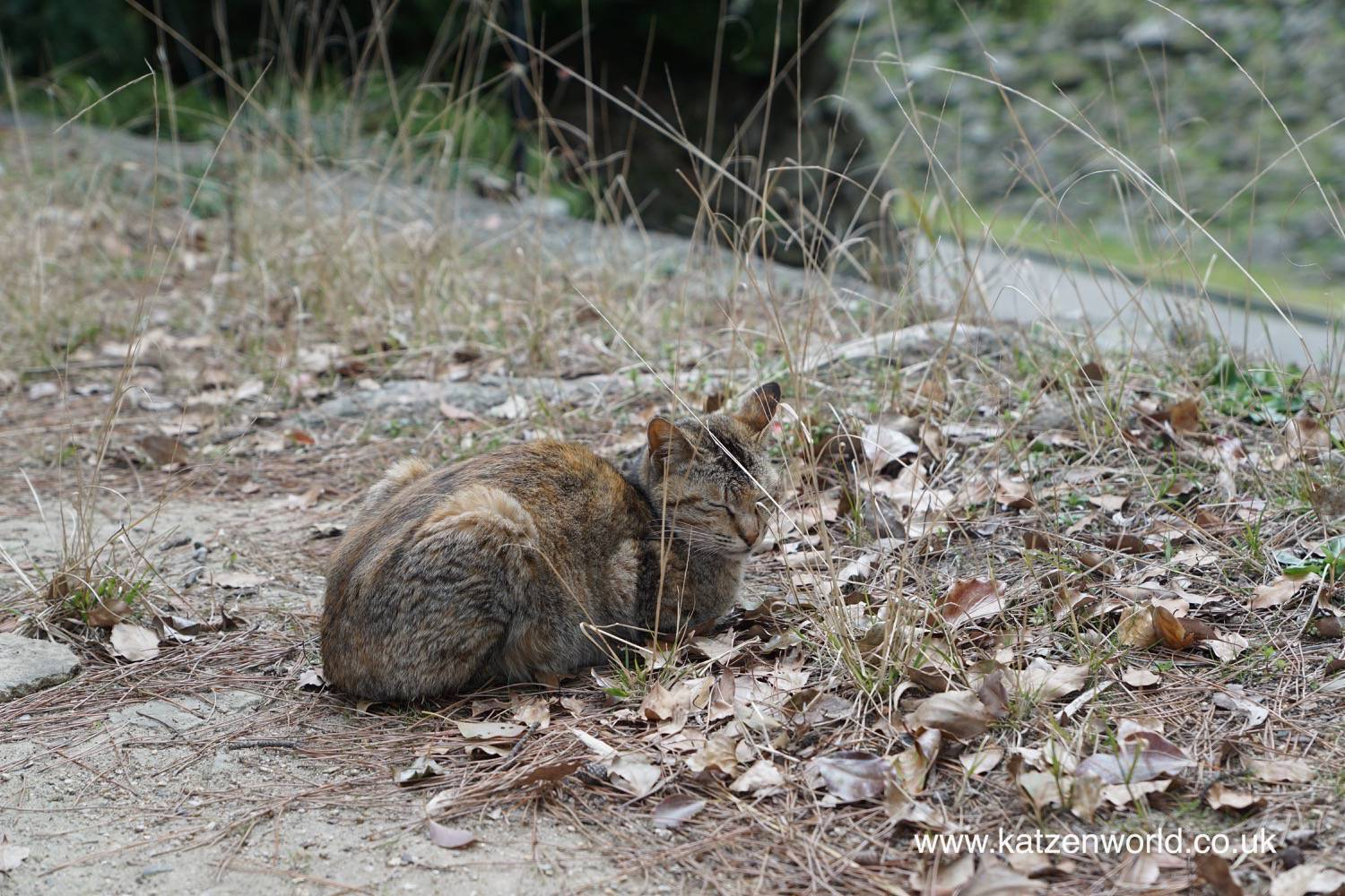 "Cat Travel: The ""Wild"" Cats of Wakayama, Japan"