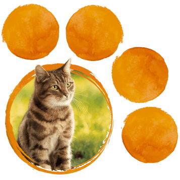 paw_naturally_cat-copy