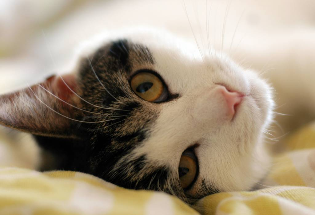 How Presence of a Cat in Our Life Affects Our Mental Health