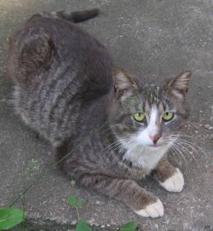 Secret-live-of-street-cats-of-Riga-5755dffda93c7-jpeg__880