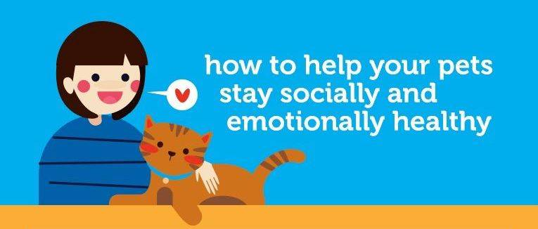 Healthy From Head to Tail: Social and Emotional Wellbeing of your Pet