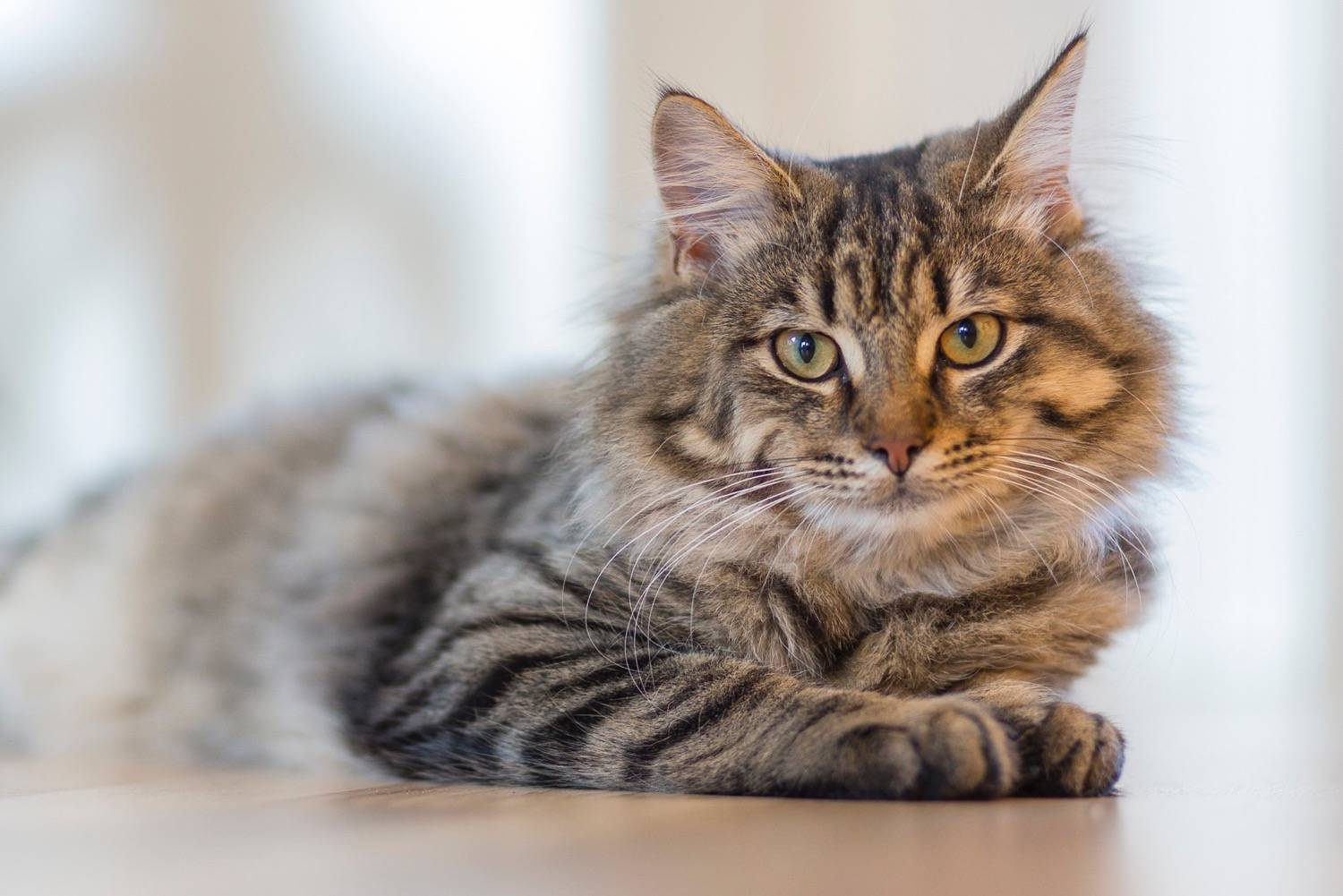 Top tips for getting your cat to the vet
