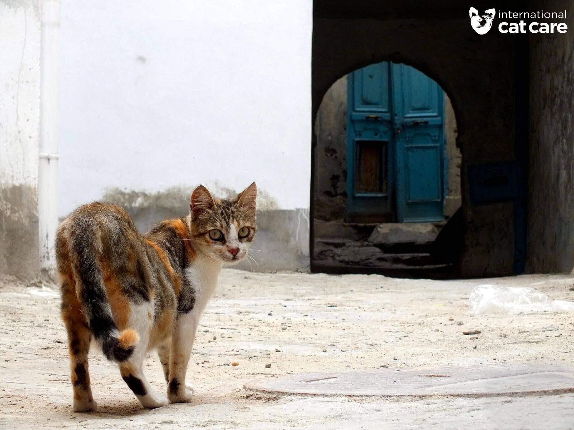 Street Cats Winner – Mei Catherall