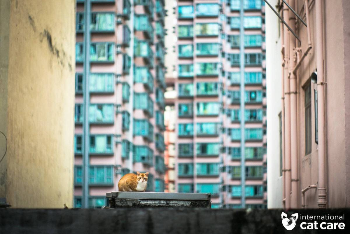 Street Cats Winner – Jonas Chan