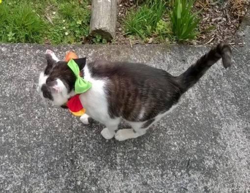 Liberace the cat