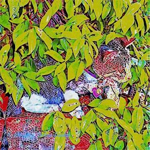 Hidden Kitten Mosaic (c) Dorothy Berry-Lound