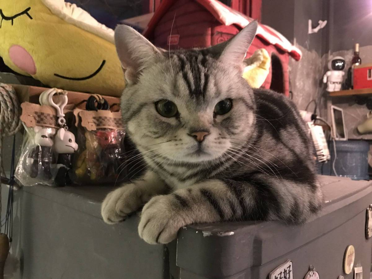 Review of Beijing's Cat Cafes