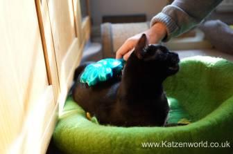Katzenworld Pet angel