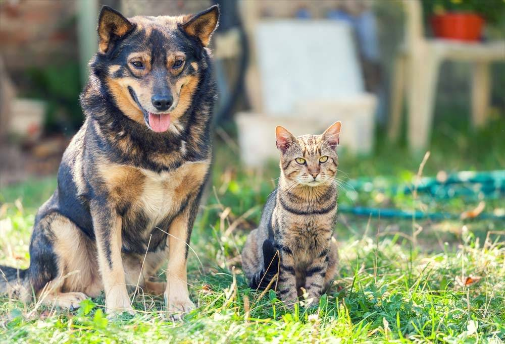 Cat and dog sitting together in the yard
