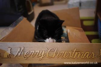 Christmas presents Secret Paw0024