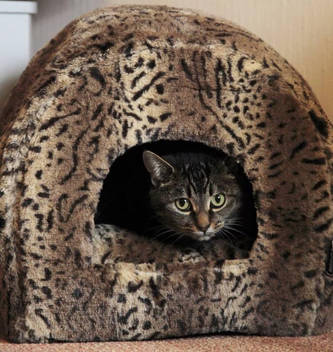Copy of RSPCA Luxury Leopard Plush Igloo Cat Bed - 2