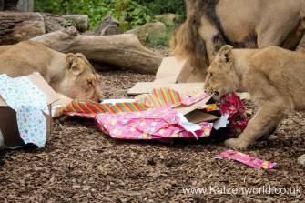 Katzenworld Lion Cubs0005
