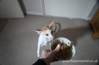Oliver & Renegade cat food0013