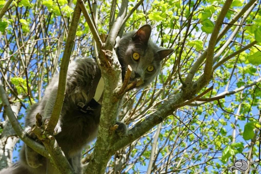 YodaTree | Fluffy Kitty