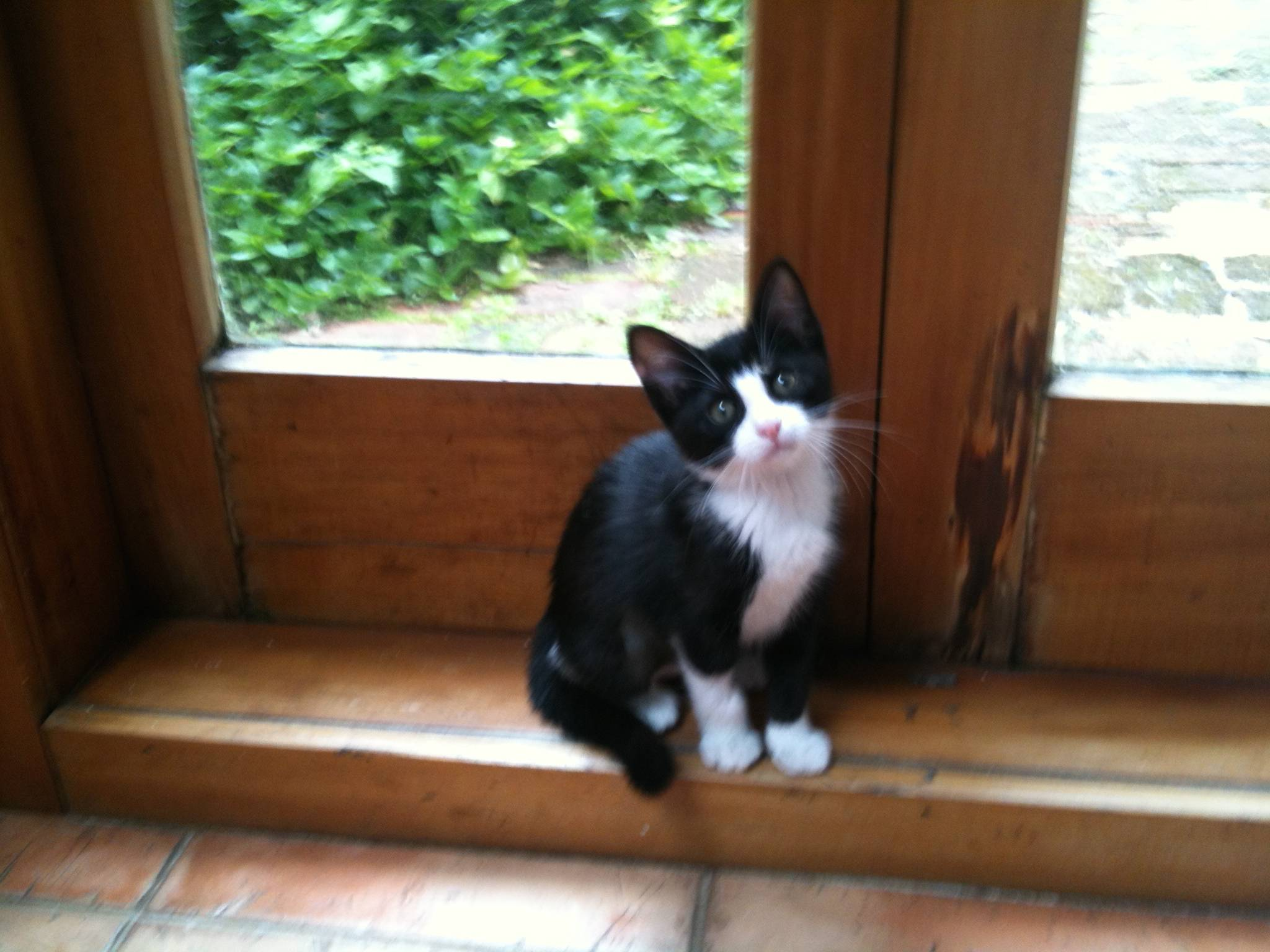 "Purrsday Poetry: ""TRIOLET TO A RESCUE KITTEN MAGIC"