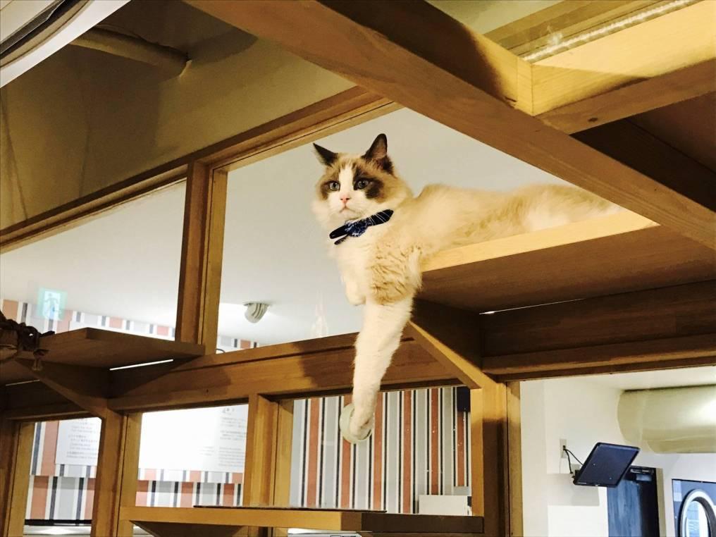 Nag_CatsGallery_02