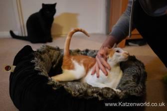 Katzenworld Mikki Bed0009