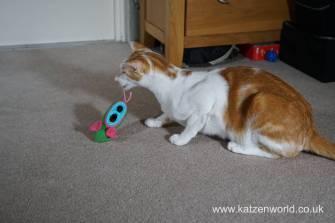 Katzenworld bowless feeder0007