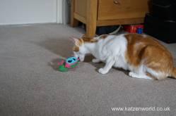 Katzenworld bowless feeder0008