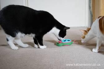 Katzenworld bowless feeder0021