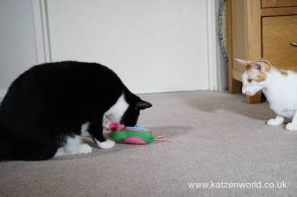 Katzenworld bowless feeder0034