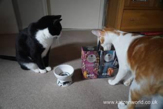 Feline Cuisine Katzenworld0004