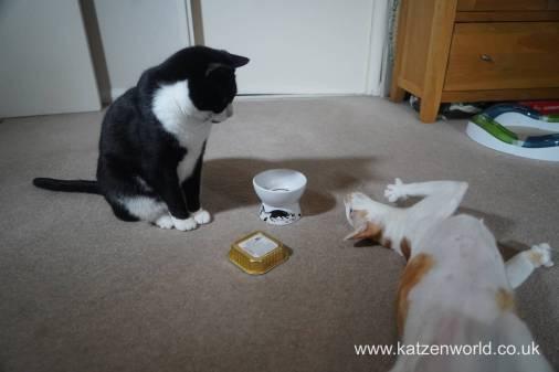 Feline Cuisine Katzenworld0015