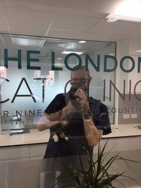 London Cat Clinic0013