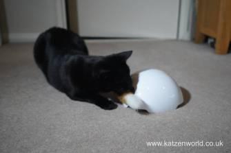 foxden Katzenworld0019