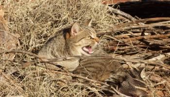 Feral Cats In The Uk Adorable Or A Danger Katzenworld
