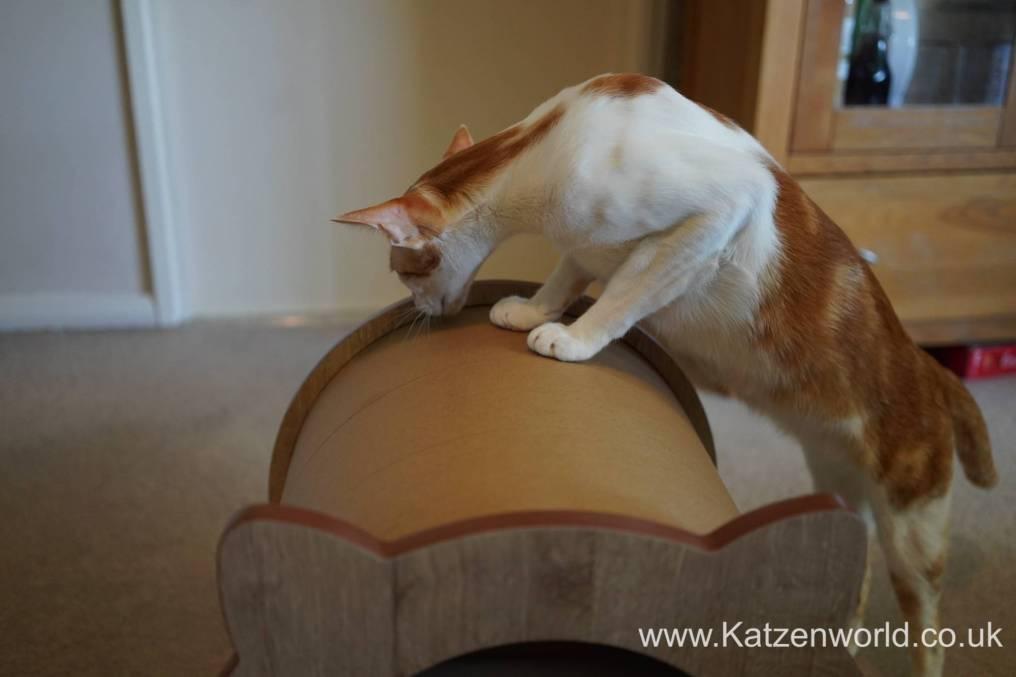 Katzenworld Catit Vesper0009