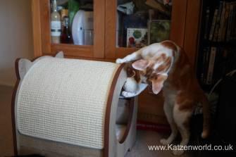 Katzenworld Catit Vesper0022